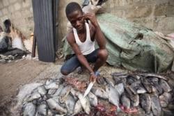 Namibe: Empresários Polacos querem investir nas pescas e agricultura 2:01