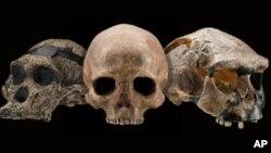 Kako su se klimatske promjene očitovale na evoluciju čovjeka?