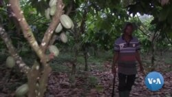 Traditional Cocoa-Exporter Ghana Pushes for More Local Chocolate