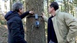 科学家们通过观察树木来监测地球的健康状况