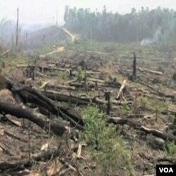 Pretjerana sječa šuma najviše doprinosi globalnom zagrijavanju, smatraju naučnici