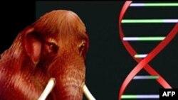 Японский ученый собирается клонировать мамонта