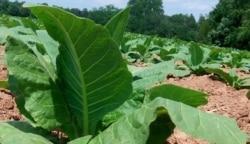 Ndimyake Mwakalyelye Reports On Government Plans To Compensate White Farmers
