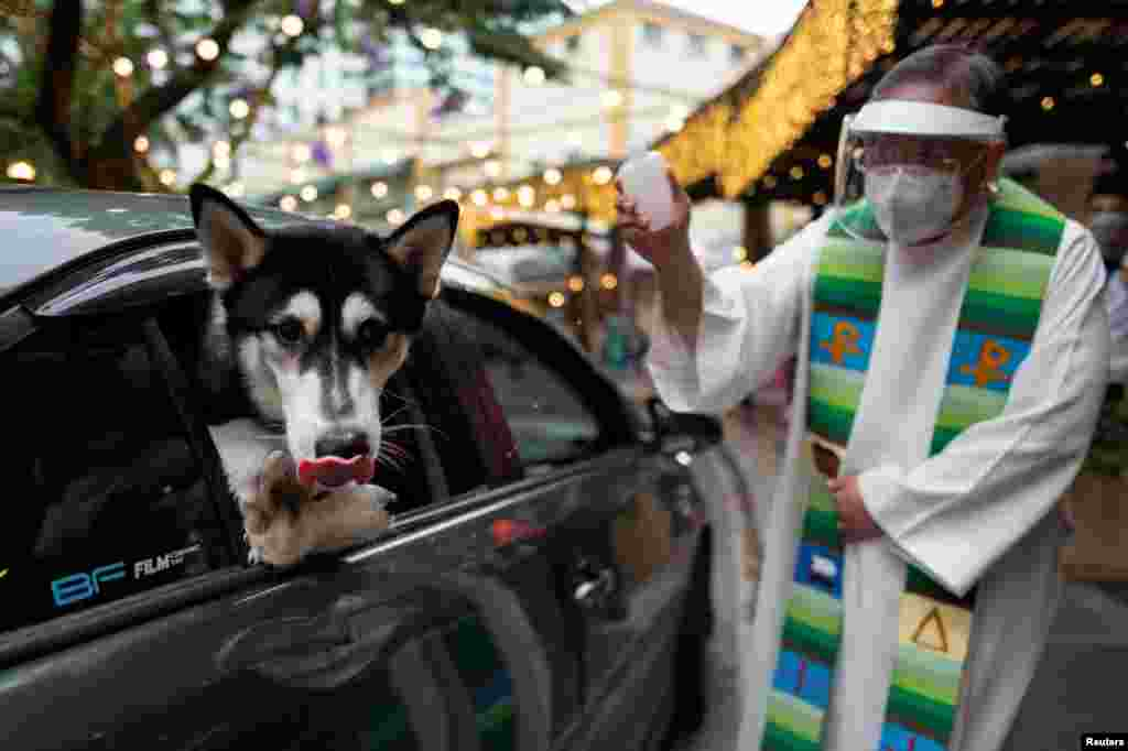 A priest sprinkles holy water as dogs look out from the car window at a drive-through pet blessing, a day before World Animal Day, at Eastwood Mall in Quezon City, Metro Manila, Philippines.