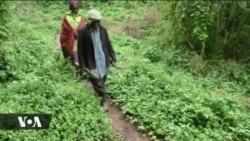 Historia fupi ya kabila la mbilikimo Uganda