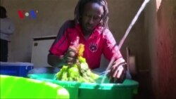 Advances in Technology, Training Make Farming in Kenya Attractive to Young