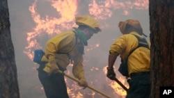 Los bomberos llevan días luchando infructuosamente contra el fuego en Bosque Negro.