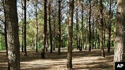 جنگلاتی رقبے میں ہر سال 66 ہزارایکڑکمی