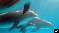 Las especies marinas serán trasladadas al acuario nacional en Baltimore.