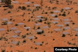 Aerial view of the Murchison Widefield Array (MWA) radio telescope in Western Australia's outback (Murchison Widefield Array)