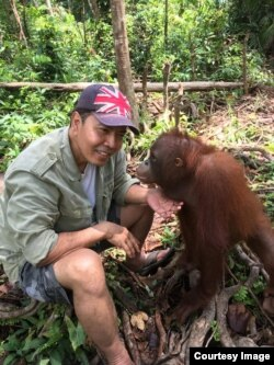 Yan Wiramidjaja bersama orangutan di Kalimantan (foto: courtesy).