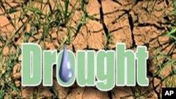 歐洲乾旱影響小麥產量