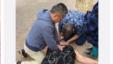 北京朝阳医院急诊科副主任医师唐子人在圣地亚哥(圣迭戈)海洋公园游玩时救助一位心跳骤停的美国游客(网络截屏)