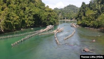 Pagar Wayamasapi di aliran sungai Danau Poso yang jernih di desa Petiro Dongi, salah satu tradisi lokal masyarakat setempat menangkap ikan Sidat, 2 November 2019. (Foto: VOA/Yoanes Litha)