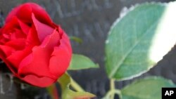 FILE - A rose is placed at a memorial in Washington, D.C., May 26, 2013. Michael Feeney died of complications from a staph infection of the kidneys.