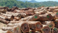 Quiz - Scientists Develop Method to Grow Wood in a Lab