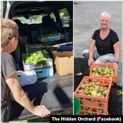Para sukarelawan memetik buah di The Hidden Orchard, membagikan buah-buahan untuk beberapa lokasi penerima donasi buah di kawasan Ballarat, Australia, 9 Maret 2021 (Facebook: The Hidden Orchard).