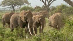Turning the Corner on Wildlife Trafficking
