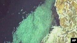 พบสัตว์น้ำพันธุ์ใหม่รวมทั้งกุ้งและหอยหลายชนิดที่ปากปล่องภูเขาไฟใต้น้ำในทะเลแคริบเบี่ยน