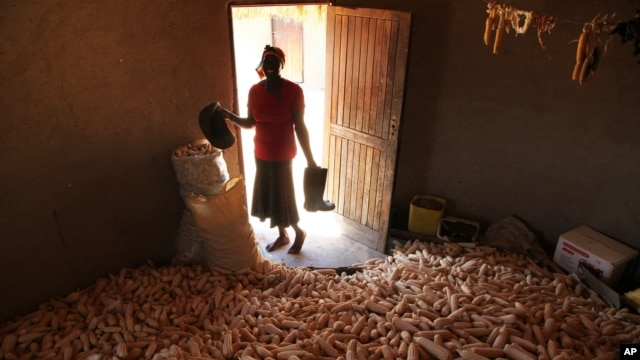 A woman stands in a hut filled with maize grain in Epworth, on the outskirts of Harare, Zimbabwe, Tuesday, Oct. 16, 2012.