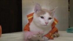 Показ кошачьих мод в Нью-Йорке