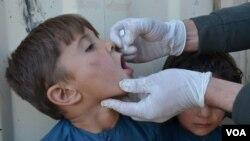 در حال حاضر ۳۰ فیصد از کارمندان صحی بخش واکسین پولیو را زنان تشکیل میدهند