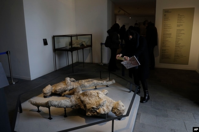 A woman takes pictures of casts of two victims of the 79 AD Eruption of Mount Vesuvius displayed at the museum Antiquarium, in Pompeii, southern Italy, Monday, Jan. 25, 2021. (AP Photo/Gregorio Borgia)