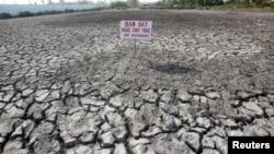 """Một tấm bảng viết """"Bán đất hoặc cho thuê"""" trên một cánh đồng lúa bị ảnh hưởng bởi hạn hán tại tỉnh Bạc Liêu, Việt Nam, ngày 30 tháng 3 năm 2016."""