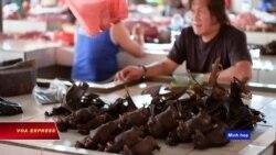 Dịch corona: TQ muốn cấm tiệt việc mua bán động vật hoang dã