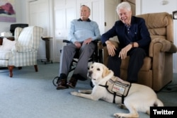 FILE - Former Republican President George H.W. Bush, left, and former President Bill Clinton, visiting Bush, pose for a photo with Sully, a yellow Labrador retriever who'll be Bush's first service dog at his home in Kennebunkport, Maine, June 25, 2018.