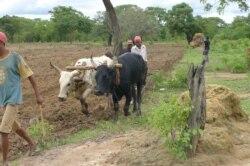 Huíla aguarda com ansiede por nova época agrícola - 1:10