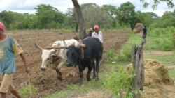 Camponeses aguardam por Terra de substituição em Palma