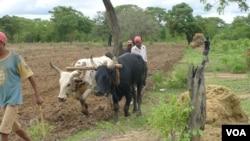 Agricultores na Huíla