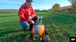 Joe Allnutt, lead roboticist at British startup company the Small Robot Company, inspects a farming robot named Tom as part of a trial in East Meon, southern England, Friday Nov. 30, 2018. (AP Photo / Kelvin Chan)