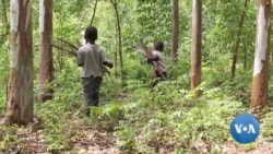 Sustainable Tree Farming Means Better Lives for Kenyan Farmers