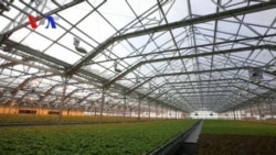 Huge Rooftop Greenhouse Grows Vegetables in Chicago