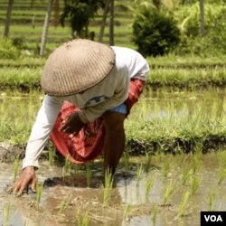 Menurut catatan SPI, petani di Indonesia hanya berpenghasilan rata-rata 5000 rupiah per hari.