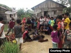 Orangutan Sumatera saat dievakuasi di Desa Gampong Teungoh, Kecamatan Trumon Aceh Selatan, Provinsi Aceh, Rabu (20/11). (Courtesy: BKSDA Aceh)