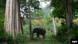 THAILAND ANIMALS DISABLED CHILDREN