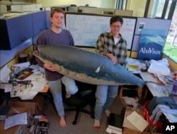 야후 설립자인 데이비드 필로(왼쪽)와 제리 양이 지난 1997년 캘리포니아 산타 클라라의 사무실에서 상어 모형을 들고 사진을 찍고 있다.