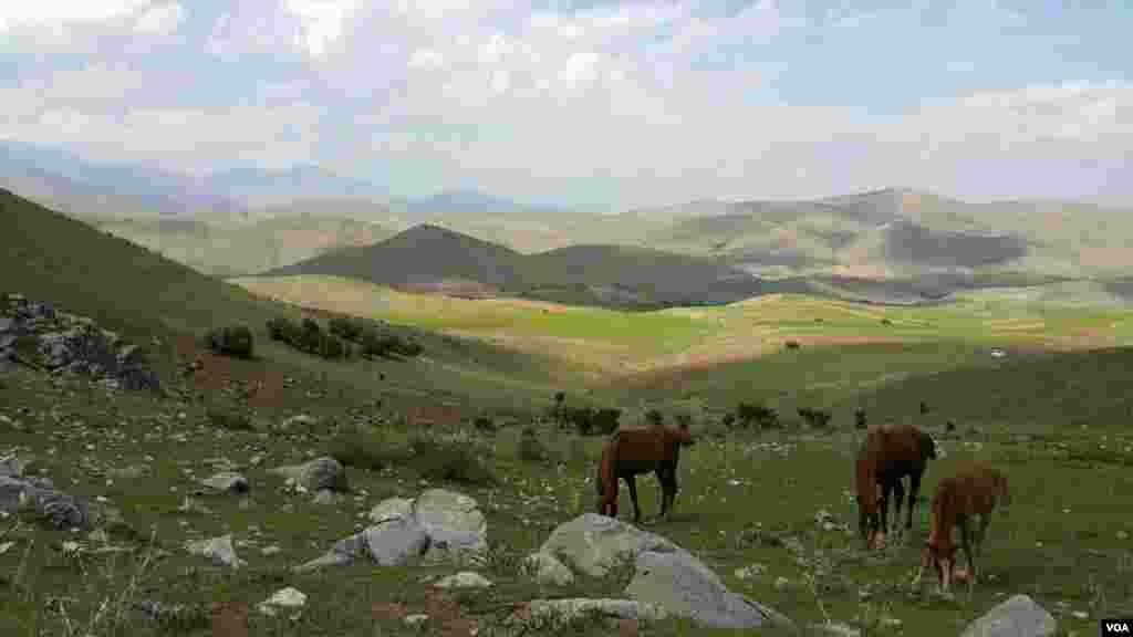 طبیعت اطراف کوه بزآو کنگاور عکس: مصطفی پورایرانی (ارسالی شما)