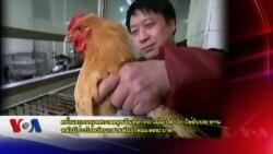 ตรุษจีนที่กวางตุ้งอาจจะไม่มีเป็ด-ไก่ให้รับประทานหลังไข้หวัดนกระบาด