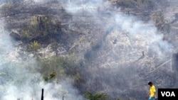 Seorang pria berjalan melewati hutan yang sedang dibakar untuk bercocok tanam di Minas, Riau (foto: dok).