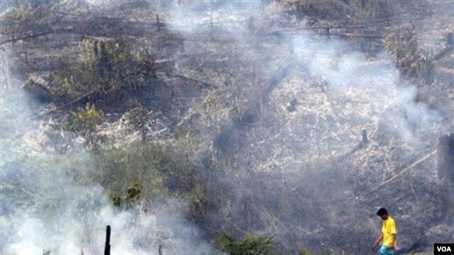 Pembukaan lahan hutan untuk perkebunan kelapa sawit di propinsi Riau. Inpres terbaru mengenai moratorium pembukaan hutan diharapkan dapat menyelamatkan kawasan hutan Indonesia.