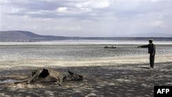 Xác 1 con trâu bị chết do hạn hán ở Kenya