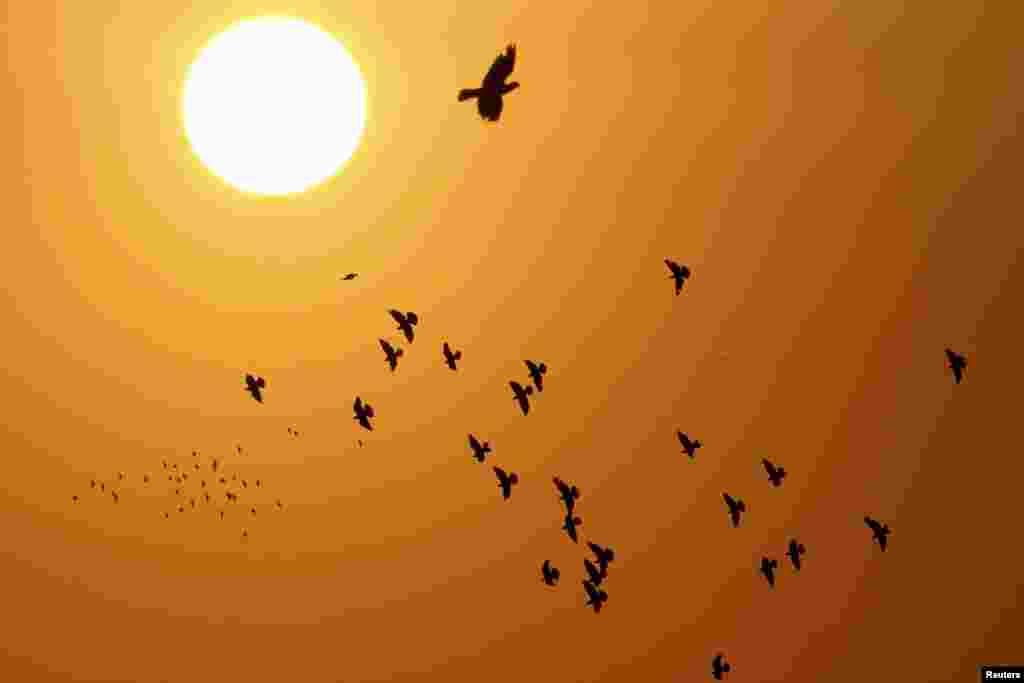 Ðàn chim bồ câu bay giữa bình mình trên thủ đô Amman của Jordan , ngày 5 tháng 9, 2013.