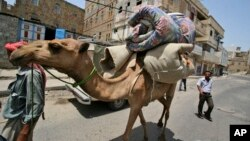 FILE - In this June 8, 2011 file photo, a Yemeni manas he leads his camel loaded with his belongings in Taiz, Yemen. Scientists say the mysterious MERS virus has been infecting camels in Saudi Arabia.