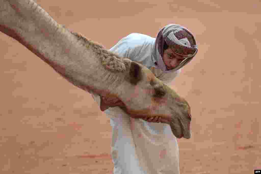 ក្មេងប្រុសសាអូឌីតម្នាក់ឈរថតរូបជាមួយនឹងសត្វអូដ្ឋក្នុងទិវា King Abdulazziz Camel ប្រចាំឆ្នាំនៅ Rumah ដែលមានចម្ងាយប្រមាណ១៥០គ.មទីក្រុង Riyadh។