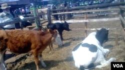 Makunike Dairy Farm.