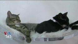 یک کافه در کالیفرنیا مردم را به پذیرفتن گربههای بیسرپرست ترغیب میکند